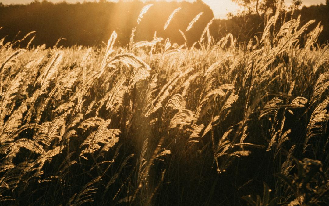 Abundancia & Creación Consciente